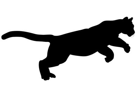 cougar: Black wild cat silhouette on white background