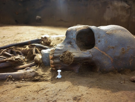 Skeleton of ancient man found during excavations in the flood zone 'Boguchanskaya' hydro. Age 800 years