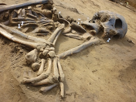Skeleton of ancient man found during excavations in the flood zone