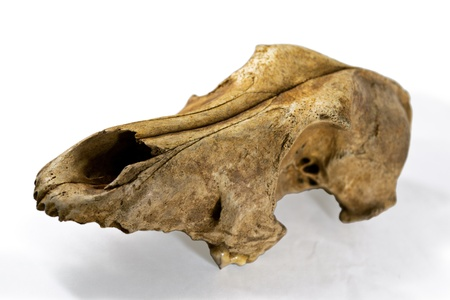 the old dogs skull