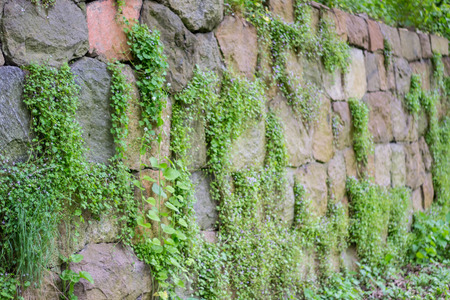 stone wall overgrown with wild flowers