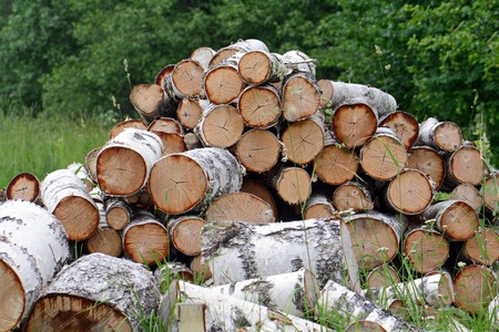 the pile of firewood prepared for splitting Stock Photo