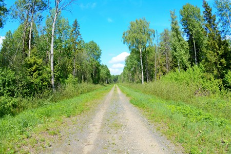 rural dirt road and the surrounding landscape