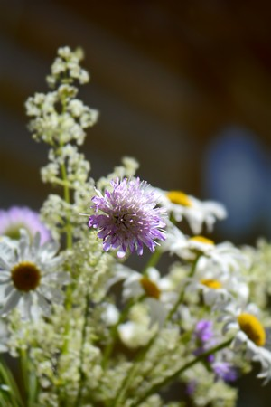 the small summer bouquet of wildflowers Stock Photo