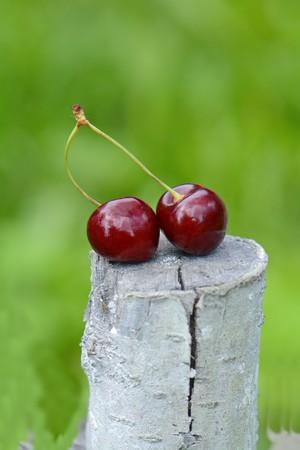 bright juicy ripe cherries on a tree stump closeup