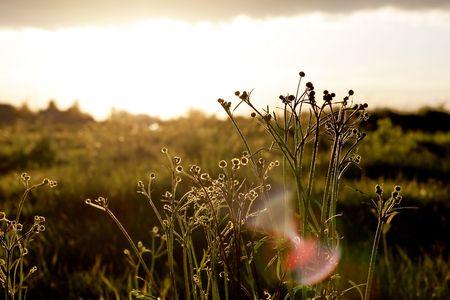 aura sun: Aura round plants from the sun