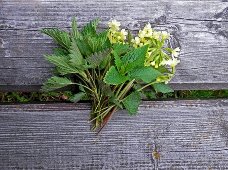 Spring herbs, primrose, nettle, bouquet captured in time nature walks  photo