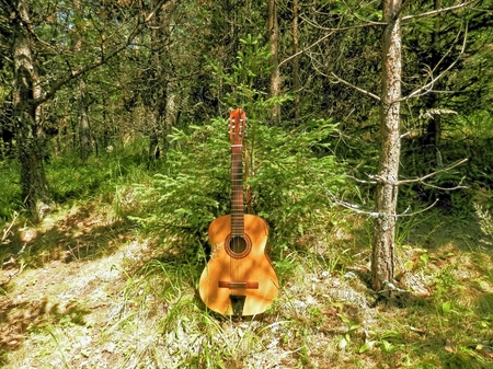 contributes: Photo of a musical instrument that contributes to the romantic moments in nature with a small tree as a symbol of friendship in the mountains Stock Photo
