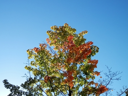 diversification: The photo at the time shows the color change of autumn leaves of a diversification perspective on nature