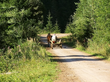 outweigh: Tandem with a horse on the road in the countryside valley outweigh the costs.