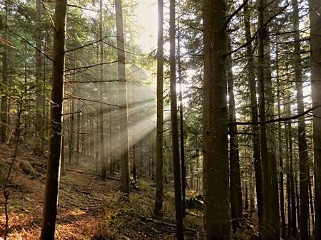 damping: Fog in the forest and highlight the rays of the sun as a nice view of the scenery of nature. Stock Photo