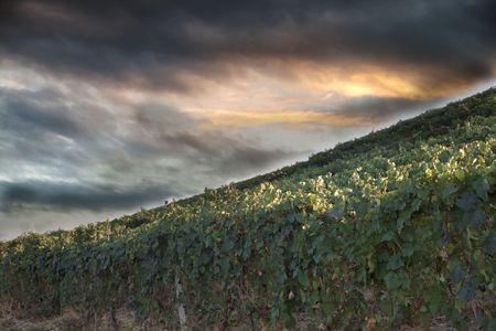 Landscape of vineyards of Monferrato, Italian hills