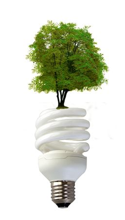 A spiral bulb over white background, with a green tree growing on top