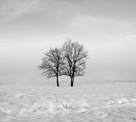 Landscape of a snow covered hill with naked trees, black and white Stock Photo