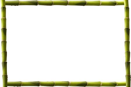 Four branches of green bamboo making an empty frame Stock Photo