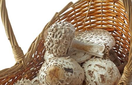 agaricus: CLoseup of mushrooms agaricus campestris in a basket