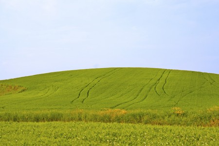 Landscape of a green hill with furrows in the grass photo