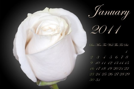 Page of 2011 calendar for January, with white rose on black Stock Photo - 8130468