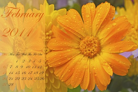 Page of 2011 calendar for February, with yellow daisy photo