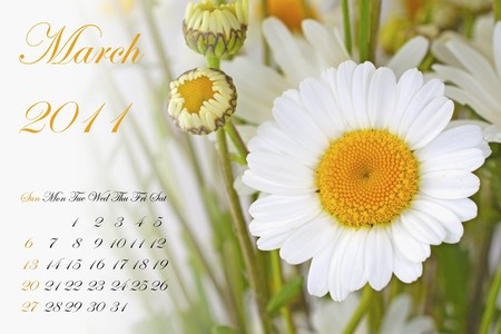 Page of 2011 calendar for March, with white daisy Stock Photo - 8130475