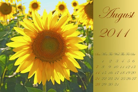 Page of 2011 calendar for August, with yellow sunflower photo