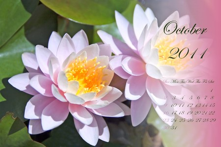 Page of 2011 calendar for October, with white and pink waterlilies photo