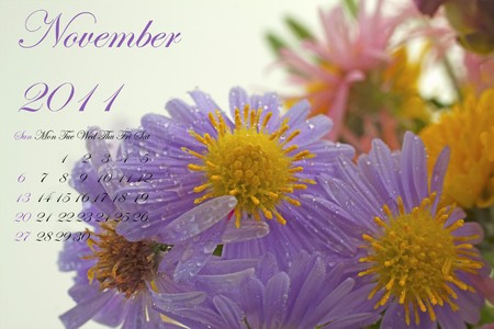 Page of 2011 calendar for November, with purple daisy photo