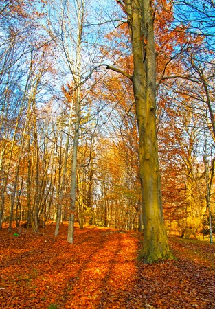 View of an autumnal forest with many leaves on the ground Stock Photo - 8295008