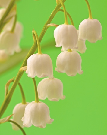 Closeup of a branch of lily of the valley over green background Stock Photo - 9396018