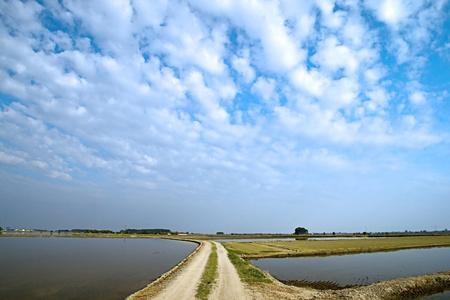 Rice field under a big cloudy sky photo