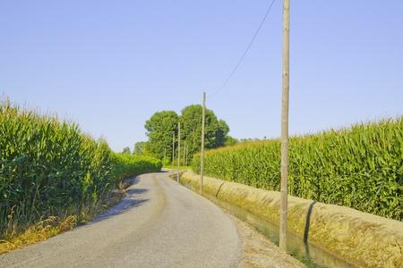 cutting through: Road cutting through the fields, between corn plants Stock Photo