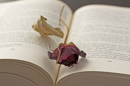 Dried rose laying over an open book  photo