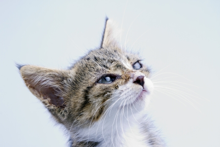 Sweet cat over a lite blue background Stock Photo - 15332917