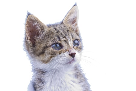 Beautiful little cat isolated over white background Stock Photo - 15588680