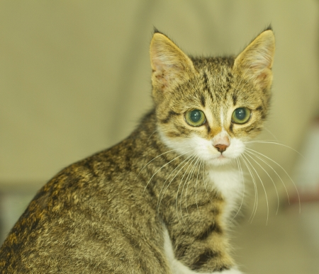 A standing cat with big green eyes Stock Photo - 15997346