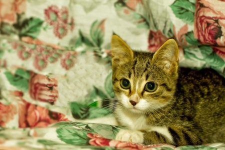 A cat over a blanket with roses Stock Photo - 15997347
