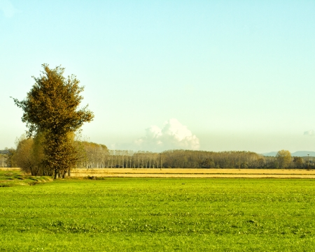 Landscape of fields with big tree on the left photo