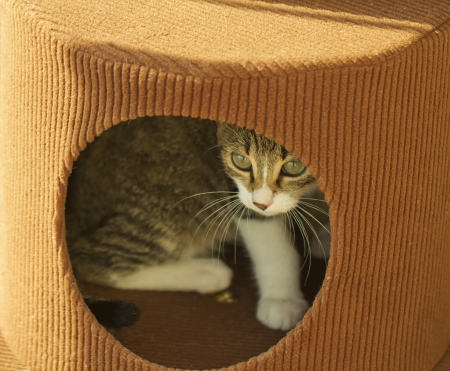 Cat hiding in a box with round hole Stock Photo - 16650818