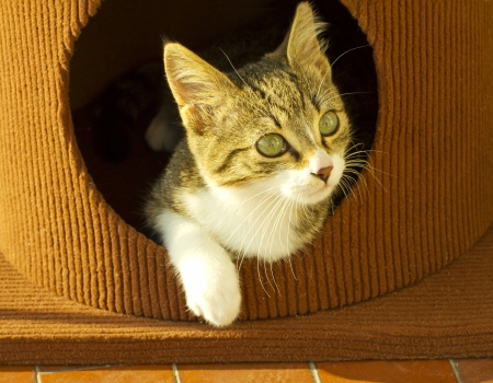 Cat coming out of a box with head and paw Stock Photo - 16650734