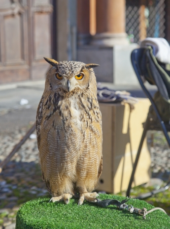 An owl standing in a public demonstration photo