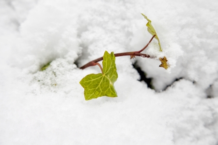 Snow surrounding a young leaf on the ground Stock Photo - 16985343