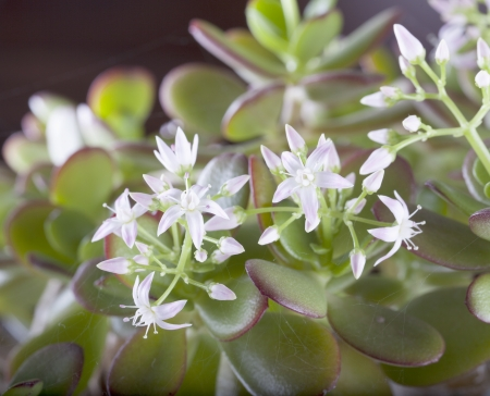 Some little white flowers in a flowerpot Stock Photo - 16985338