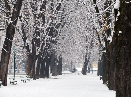 Winter vision of avenue lined by snowy trees Stock Photo - 16985347