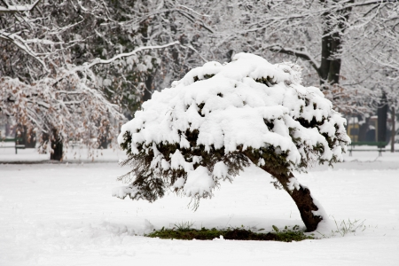 Winter landscape with little tree in a forest Stock Photo - 17090571