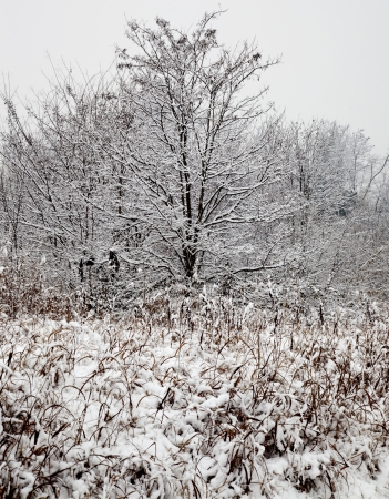 Winter snowscape with a tree and many plants Stock Photo - 17090574