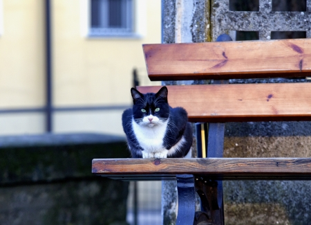 Dangerous cat with menacing look sitting on a bench Stock Photo - 17123127