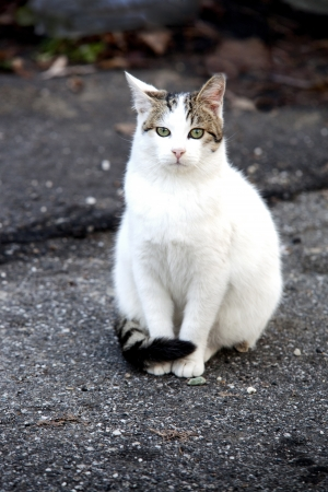 White cat sitting still on the road Stock Photo - 17123155