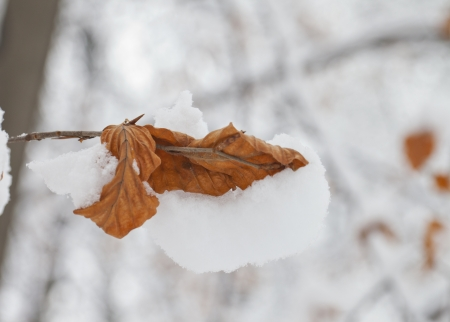 White snow on a red leaf, over gray sky Stock Photo - 17123088