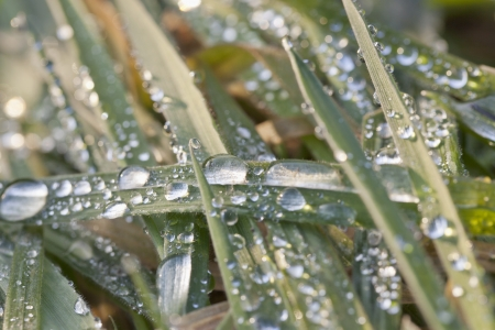 Drops all over some green grass blades Stock Photo - 17185547