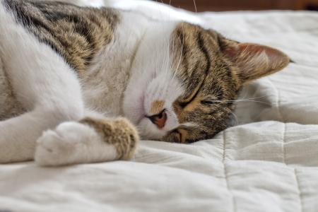 A sleeping cat over a white blanket Stock Photo - 18511919